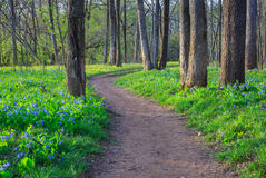Bluebell Wildflower Walking Trail Path royalty free stock photography