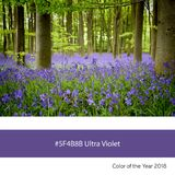 Ultra Violet Color of the Year - Bluebell wood Stock Photos