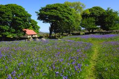 Free Bluebells And Red Roofed Barn Royalty Free Stock Images - 13500309