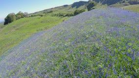Bluebells Co Antrim Northern Ireland. Beautiful Bluebells Co Antrim on Sallagh Hills in Northern Ireland royalty free stock images