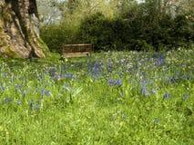 Bluebells en un parque con el banco Imagen de archivo libre de regalías