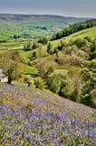 Bluebells en una ladera asoleada Imagenes de archivo