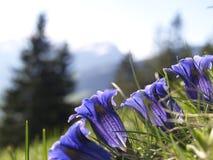 Bluebells in field