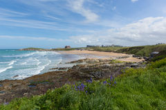Bluebells at Fistral beach Newquay North Cornwall uk with waves breaking in spring Royalty Free Stock Photography