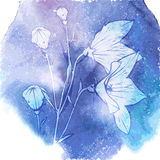 Bluebells flowers  on blue wotercolor background. Vector illustration Royalty Free Stock Images