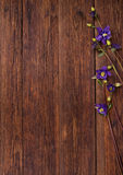 Bluebells flowers on wooden table. Top view, copy space. Stock Photo