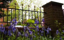Bluebells from ground with Victorian style garden railings and brick pillar in front garden of English suburban house Stock Photos