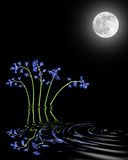 Bluebells and Moon Beauty Royalty Free Stock Photo