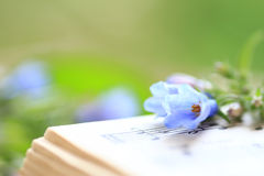 Bluebells on a Music Book Stock Images
