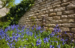 Bluebells - Old Stone Wall - England stock photos