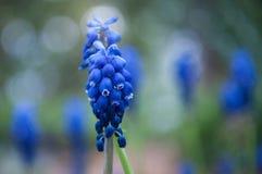 Bluebells przeznaczenie zdjęcie stock
