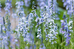 Bluebells in the spring Stock Photography