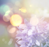 Bluebells with vintage effect Royalty Free Stock Photo
