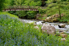 Bluebells at Watersmeet near Lynmouth Devon Royalty Free Stock Photography