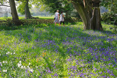 Bluebells in wood. Badesley Clinton, Warwickshire, England, Two middle-aged women walking and talking on the Millenium way footpath. A bluebell wood is in the stock photo
