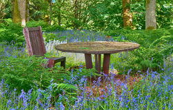 Bluebells in woodland. Buebells flowering in woodland garden Stock Image