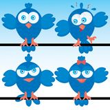 Blueberds icon set Stock Photo