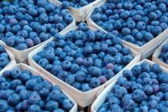 Blueberrie in cestini immagini stock