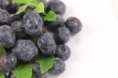 Blueberrie textfield 3 Royalty Free Stock Image