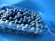 Blueberries. A clear plastic tub filled with fresh blueberries, bright blue background royalty free stock photos