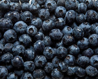 Blueberries. A bunch of fresh Blueberries stock images