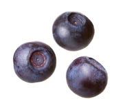Blueberries. On a white background Stock Photos