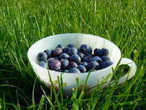 Blueberries. A cup of harvested blueberries in the grass Royalty Free Stock Photography