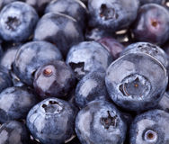 Free Blueberries Stock Images - 16283104