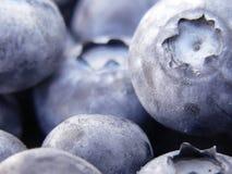 Free Blueberries Stock Image - 166891