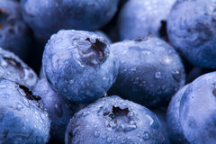 Blueberries. Extreme closeup of fresh blueberries with water droplets Stock Image