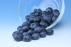 Blueberries. A bunch of ripe, plump blueberries spilling out of a glass bowl Royalty Free Stock Image