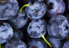 Blueberries. Are a group of flowering plants in the genus Vaccinium, sect. Cyanococcus. The species are native to North America and eastern Asia.  are both Royalty Free Stock Photos