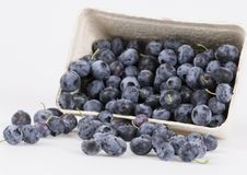 Blueberries. Are a group of flowering plants in the genus Vaccinium, sect. Cyanococcus. The species are native to North America and eastern Asia.  are both Stock Photo