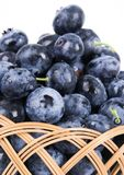 Blueberries. Are a group of flowering plants in the genus Vaccinium, sect. Cyanococcus. The species are native to North America and eastern Asia.  are both Stock Images