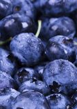 Blueberries. Are a group of flowering plants in the genus Vaccinium, sect. Cyanococcus. The species are native to North America and eastern Asia.  are both Royalty Free Stock Image