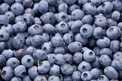 Blueberries 2 Stock Photo