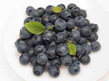 Blueberries. Plate of freshly picked blueberries Stock Photography