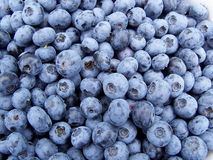 Blueberries. Closeup of a pail full of Blueberries royalty free stock images