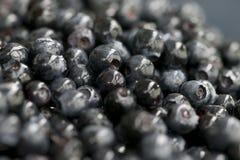 Blueberries. Fresh moist forest picked blueberries Royalty Free Stock Photo