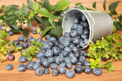 Blueberries. And leaves on a wooden table falling out of a bucket stock image
