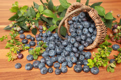 Blueberries. And leaves on a wooden table falling out of a basket stock photos