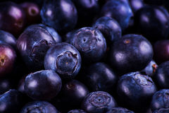 Blueberries. A close up shot of some fresh blueberries Royalty Free Stock Image