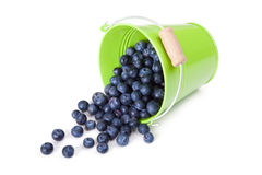 Blueberries. Spilling from a green metal bucket Royalty Free Stock Images