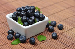 Blueberries. In smoll white bowl with leaves Stock Image