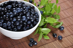 Blueberries. In a white bowl with  and blueberry twigs Royalty Free Stock Photos