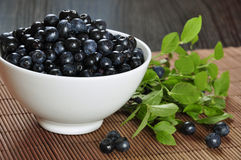 Blueberries. In a white bowl with blueberry twigs Royalty Free Stock Images