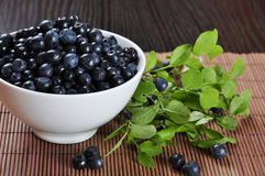 Blueberries. In a white bowl with blueberry twigs Stock Photography