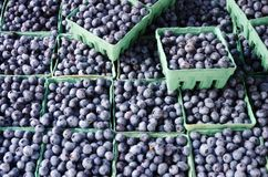Blueberries. Organic farmers display of fresh, ripe blueberries in boxes Stock Photo