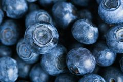 Blueberries. Lots of blueberries with one in focus royalty free stock photography