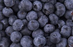 Blueberries. Background made from tons of blueberries Stock Photo